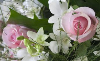 fiori_346x213